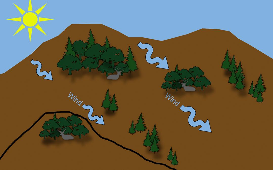 diagram showing the proper wind direction for mule deer stalks.