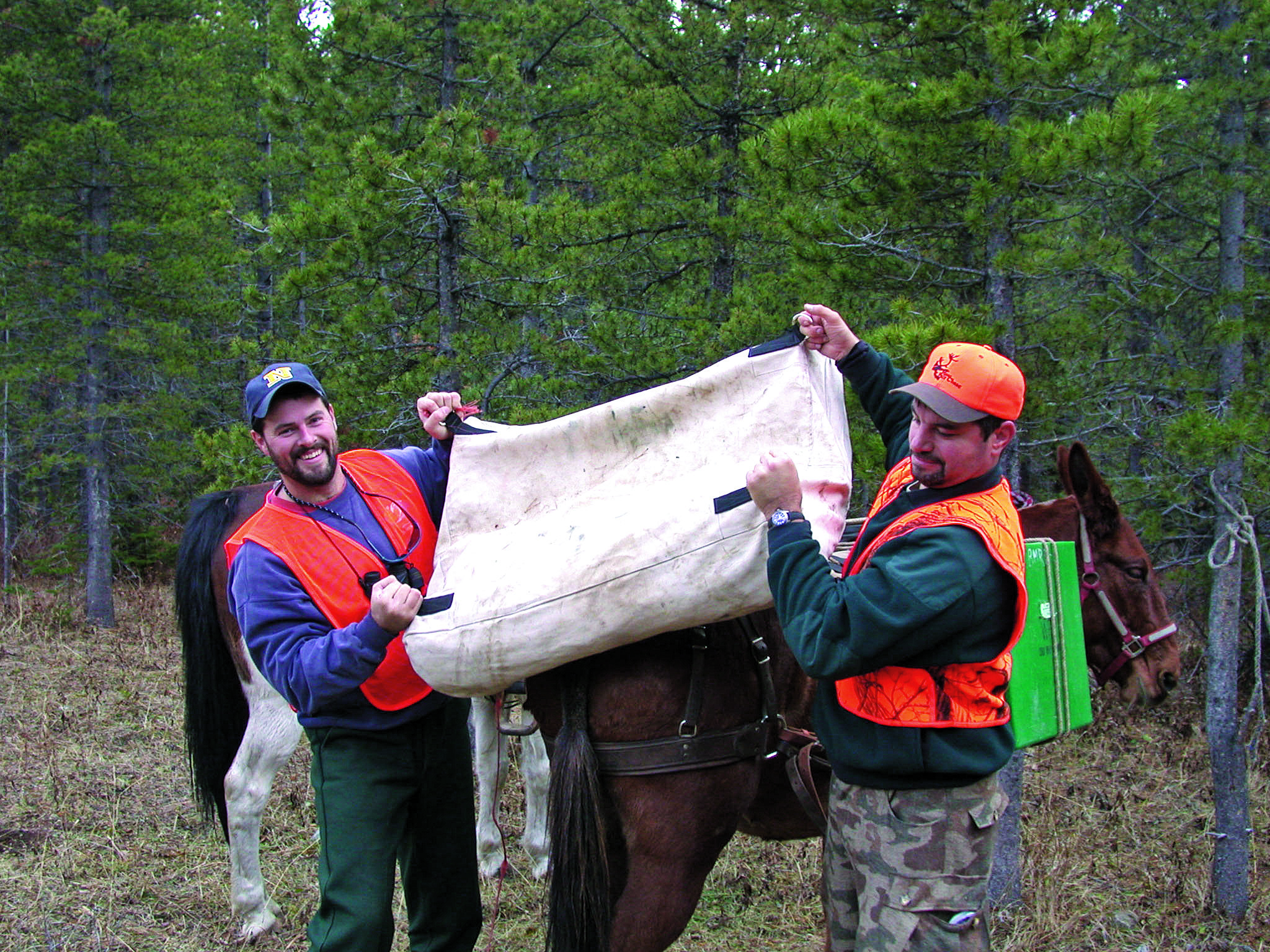 unloading the canvas wall tent off a horse